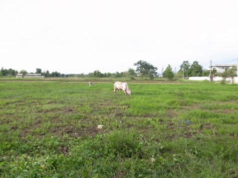 チェンマイの田園風景