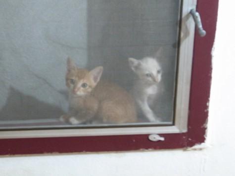 窓際の仔猫ちゃん